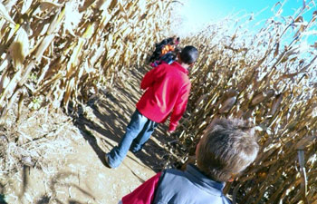 Corn Maze - Hackettstown, NJ