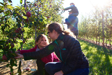 Apple Picking at Donaldson Farms (New Jersey)
