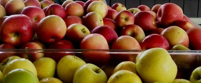 NJ grown apples