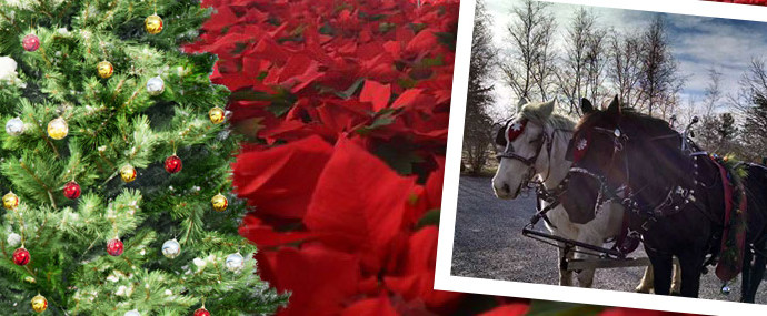Christmas at Donaldson's Greenhouse & Nursery