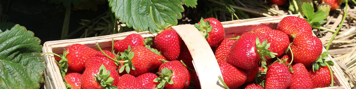 Get Ready for Strawberry Season!