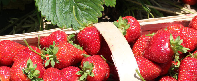Fresh strawberries - Donaldson Farms (Hackettstown, NJ)