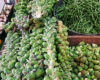 Brussels Sprouts at our Farm Market - Hackettstown, NJ