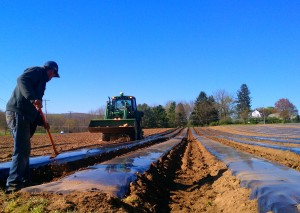 Laying-plasticulture-before-planting