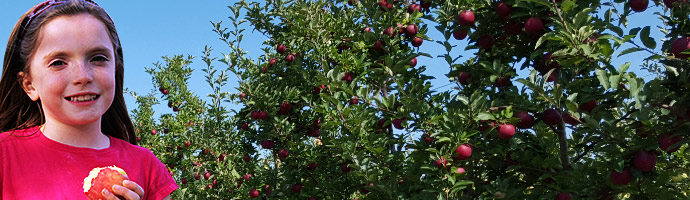 Pick Your Own Apples (Hackettstown, NJ)