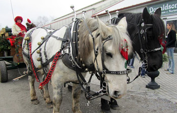 Horse-Drawn Carriage Rides - Hackettstown, NJ